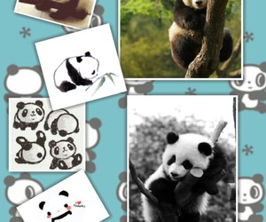 Collage, cute, and panda image