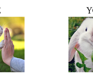 bunny, me, and photography image