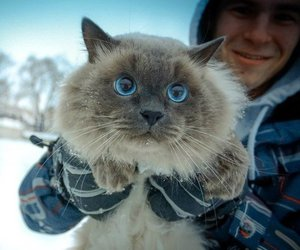 cat, eyes, and winter image