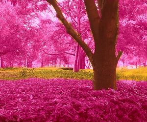 pink forest image
