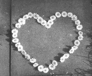 flowers, heart, and daisy image