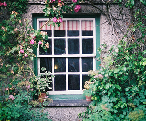 window, flowers, and photography image