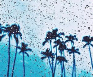 rain and palms image