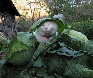 cat, plants, and animal image