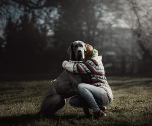 ama, animal, and can image