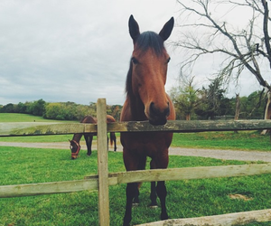 animal, pretty, and horses image