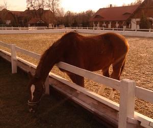 beautiful, horse, and m & e image