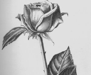 black and white, drawing, and rose image