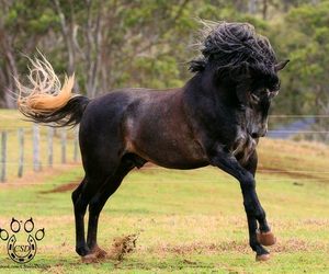 beauty, black, and crazy image