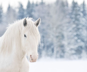 beautiful, horse, and white image