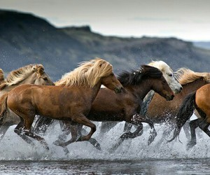 horse, animal, and wild image