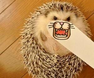 hedgehog, animal, and funny image