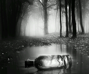 black and white, photography, and forest image
