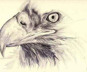 eagle, draw, and art image