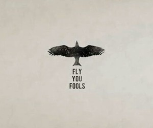 fly and fool image