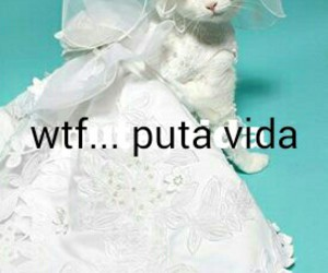 cats and wedding image
