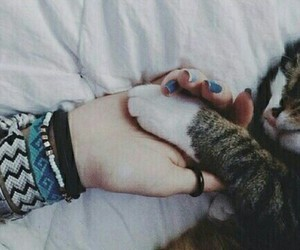 animal, cat, and love image