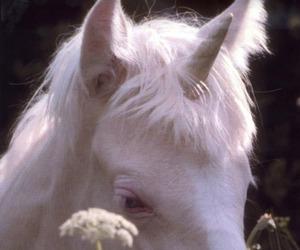 unicorn, white, and horse image