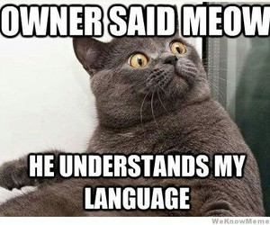 cats, meow, and funny image