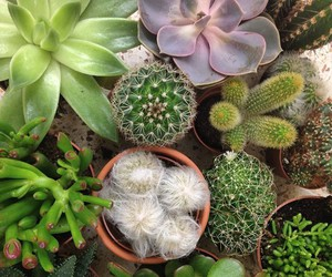 plants, grunge, and cactus image