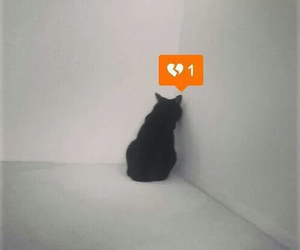 cat, black, and heart image
