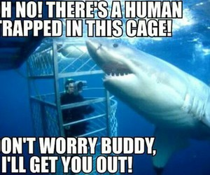 shark and funny image