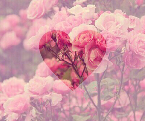 flowers, heart, and rosa image