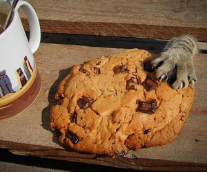 cats, cute, and Cookies image