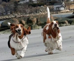 dog, funny, and running image