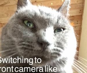camera, car, and ears image