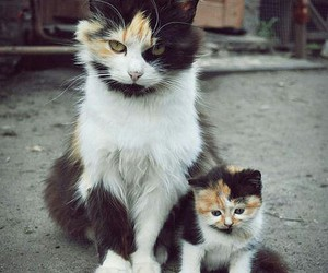 cat, cats, and pets image