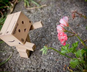 Amazon, flower, and japan image
