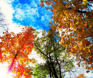 tree, beautiful, and colorful image