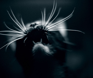 cat, dark, and teeth image