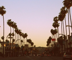 california and palms image