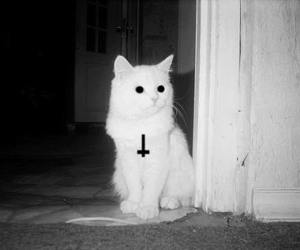cat, white, and cross image