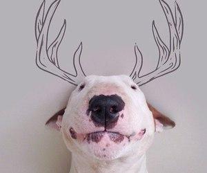dog, happy, and black image