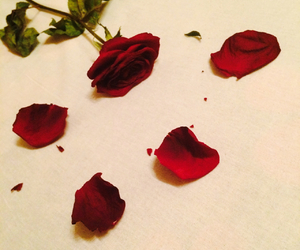 experience, moment, and roses image