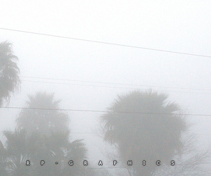 pale, tumblr, and palm image