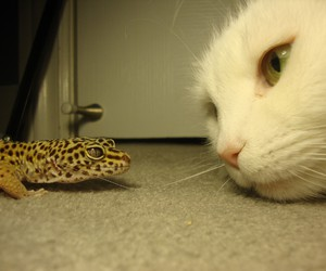 cat, lizard, and face image