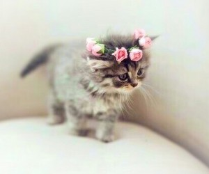 baby, crown, and flower image