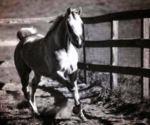beauty, runing, and horses image