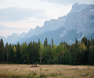 nature, mountains, and animal image