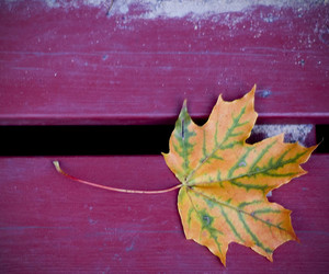 d40, leaf, and autumn leaves image