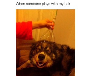 dog, funny, and satisfaction image