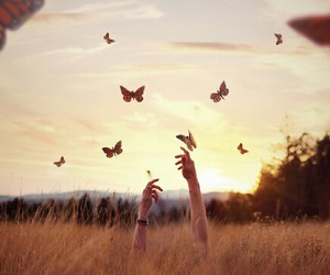 butterfly, nature, and sunset image