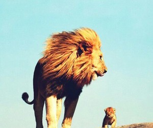 animals, lion, and cute image