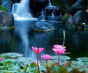 bali, beautiful, and water lily's image