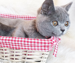cute, grey, and poes image