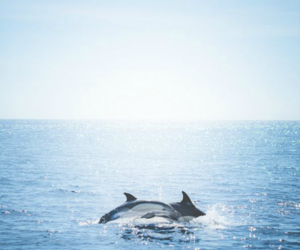 dolphin, sea, and blue image